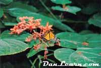 NPC Butterfly Conservatory