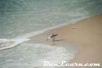 Sandpiper on shoreline