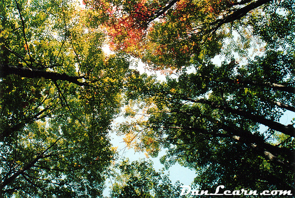 Forest ceiling